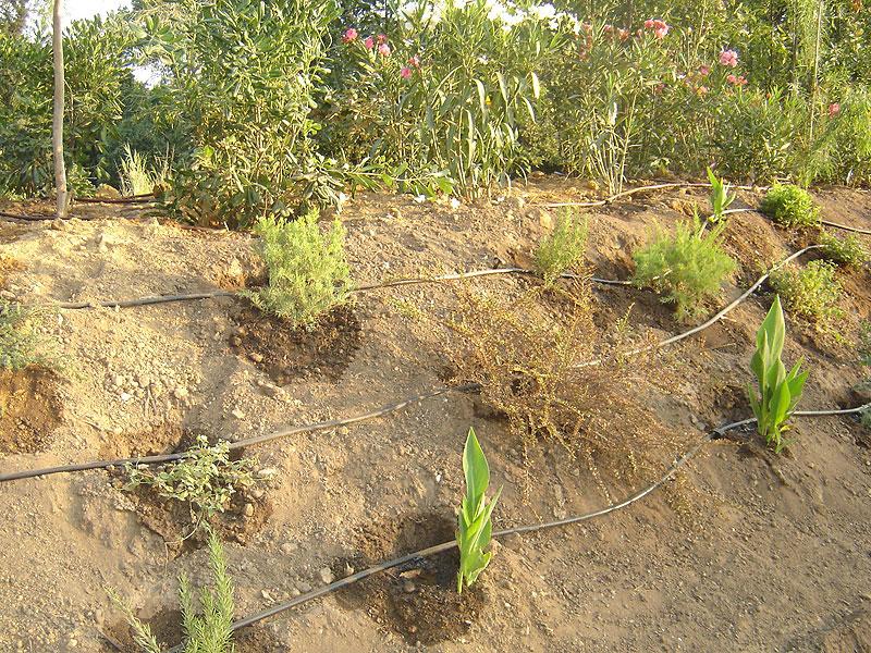 arrosage automatique jardinier paysagiste saint tropez les jardins de grimaou grimaud var. Black Bedroom Furniture Sets. Home Design Ideas